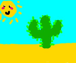 cactus on a dessert