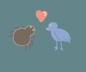 Spider and bird love
