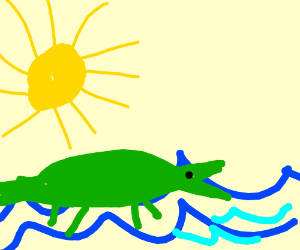 A fat crocodile