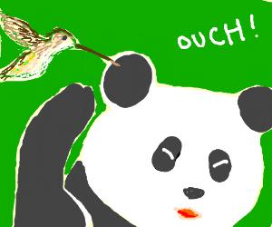 humming bird stabs panda in ear with beak
