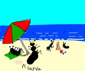 Ant family vacation