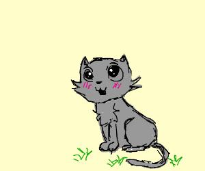 A chibi cat