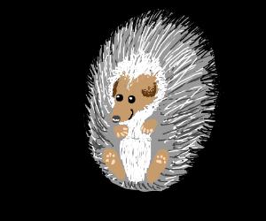 Adorable Hedgehog :)