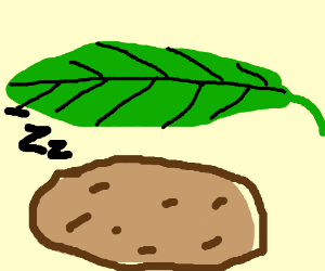 A potato sleeping under a leaf