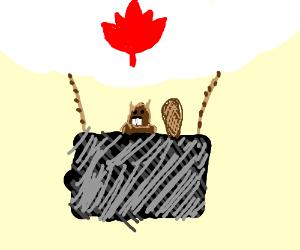 Bever in a Canadaian hot air ballon