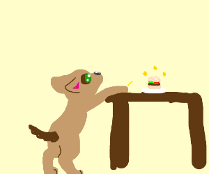 dog wants something on the table
