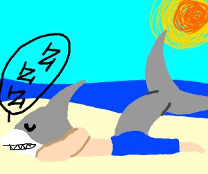 Sharkboy taking in nap under the sun