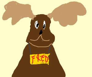 Moose named Fred