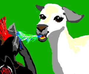 llama spits in warrior's face