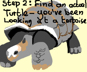 Step 1: look at a turtle