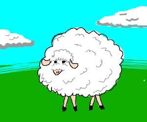 big fluffy sheep