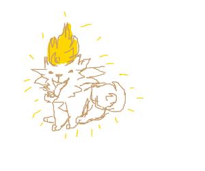 Goku is a Pomeranian