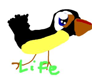 Toucan life
