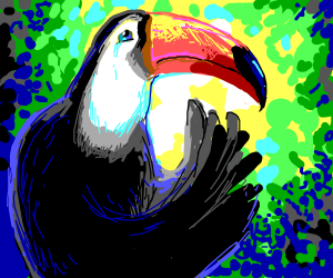 toucan is depressed about life