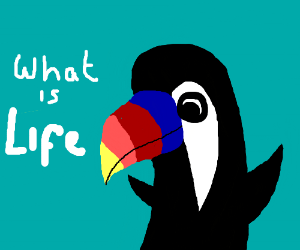 Amazing Toucan contemplates everything