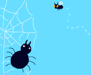 Spider looks at a fly
