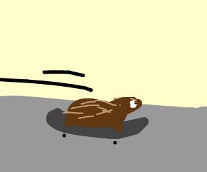 canybara scaiting