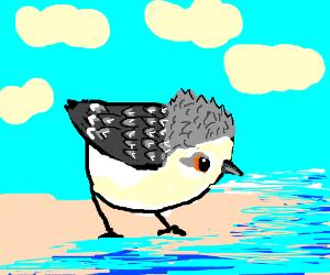 Pixar's bird