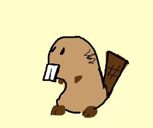 Injured Beaver