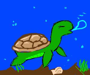 Sleepy sea turtle