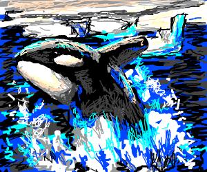 The Killer Whale/Orca.