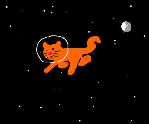 Cat walking in space