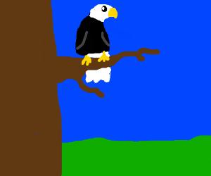derpy eagel