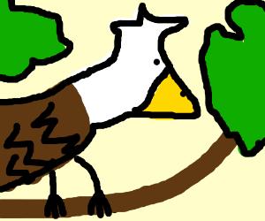 Eagle sitting on branch.