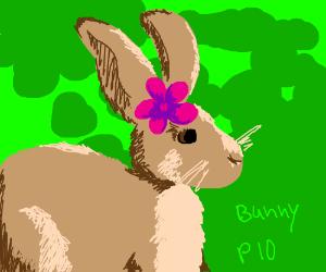 Bunny PIO