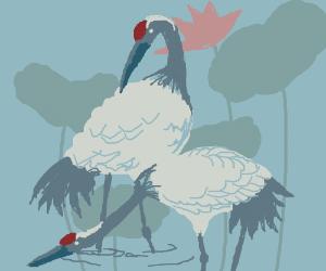 Cranes (bird) in a lotus pond
