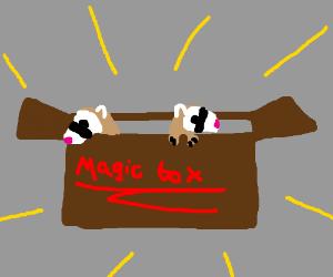 Magic box of ferrets