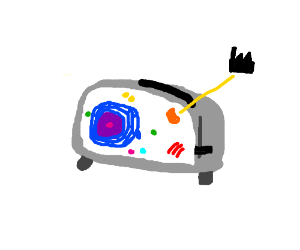 Mitochondria-The powerhouse of the toaster