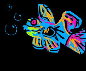 Mandrin Goby (Synchiropus splendidus)