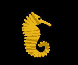 A sea creature