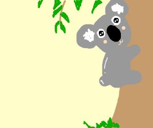 Cute koala climbing Eucalyptis Tree