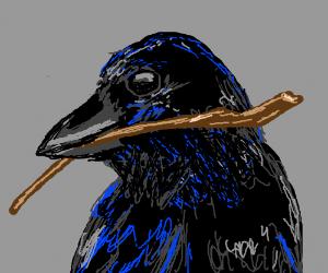 A raven holding a stick