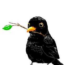 Blackbird holding a twig