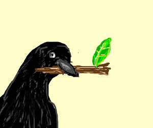 Blackbird with twig in his beak