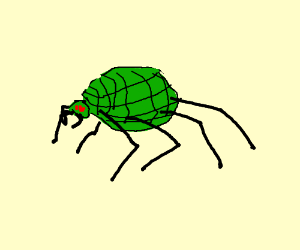 Grenade Curious Spider