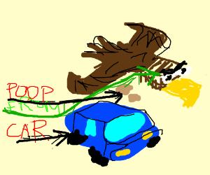 Savage bird poops on car