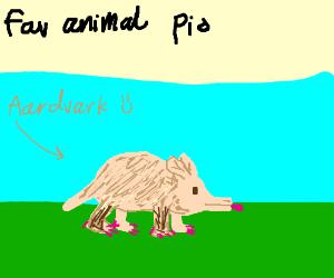 favourite animal pio