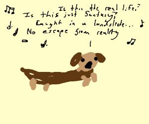 Wiener dog singing