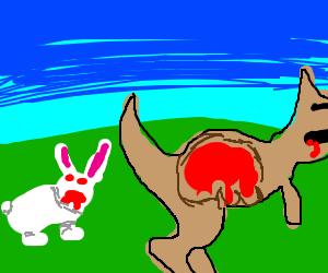 Demon bunny killed a kangaroo