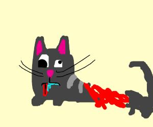 severely injured, brain damaged cat