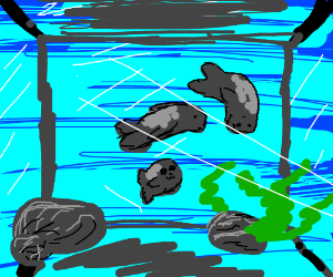 a family of seals in an acuarium