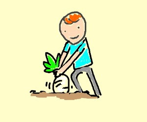 Pulling up a turnip