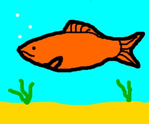 normal looking orange fish