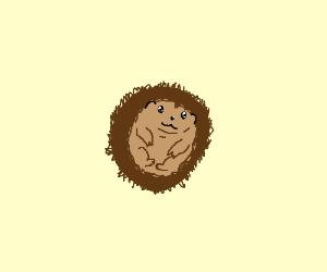 Cute Baby Hedgehog Drawing By Mackenerpassword