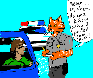 Meow do you know why I pulled you over?
