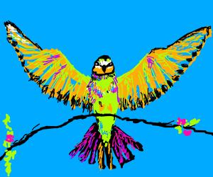 beautifully flamboyant hummingbird